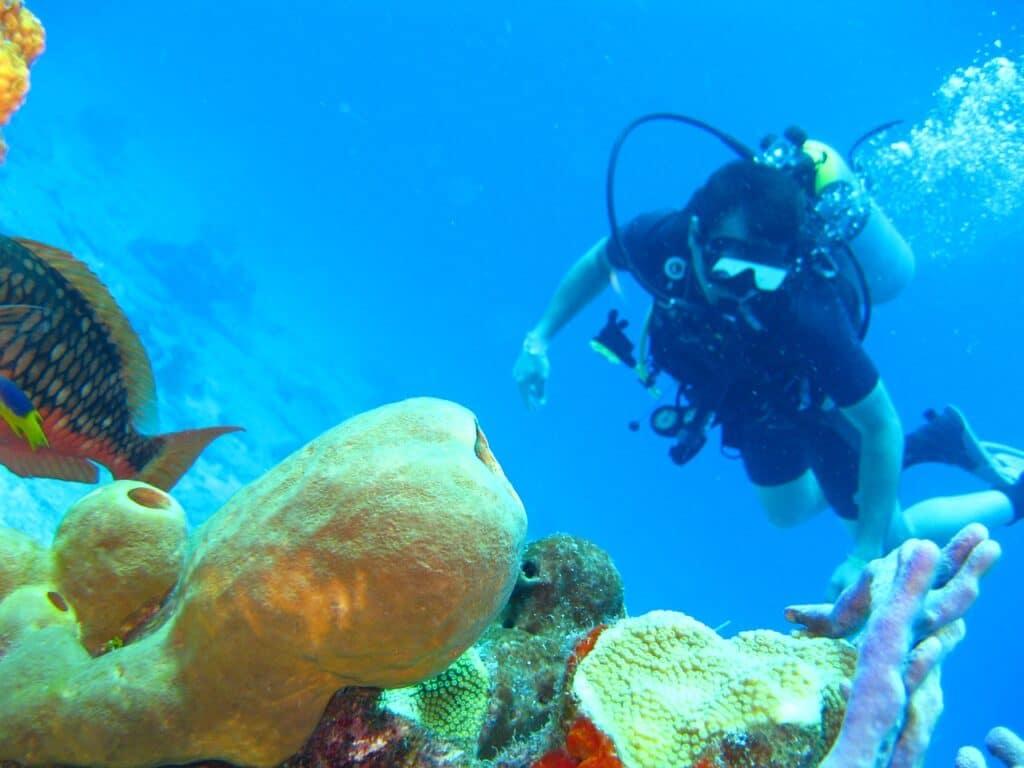 diving, ocean, coral-1707761.jpg