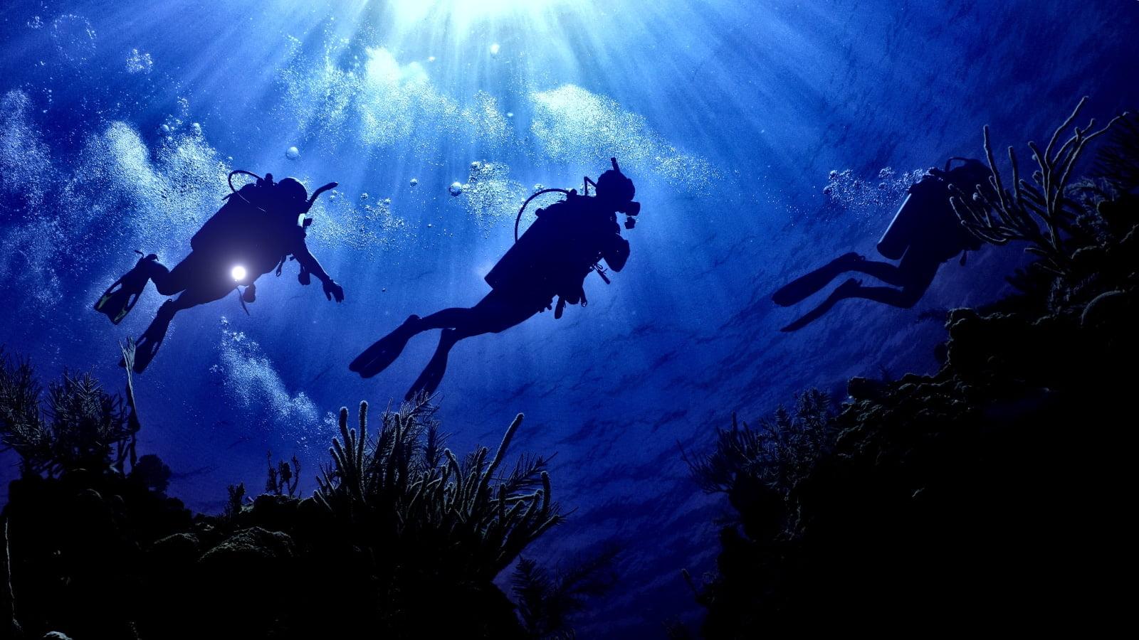 octopus-dive-school.jpg