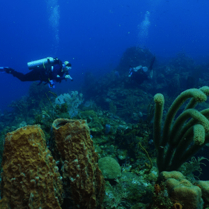 What Are the Best Dive Sites in Roatan?